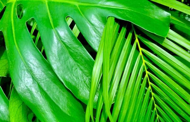Filodendron xanadu i palma roślin w ogrodzie