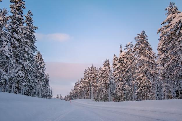 Finlandia. wieczorny zimowy las. pusta droga. dużo śniegu