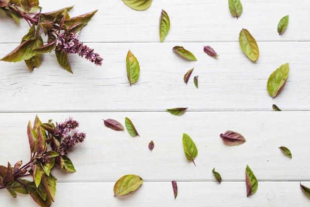 Fioletowe i zielone rośliny