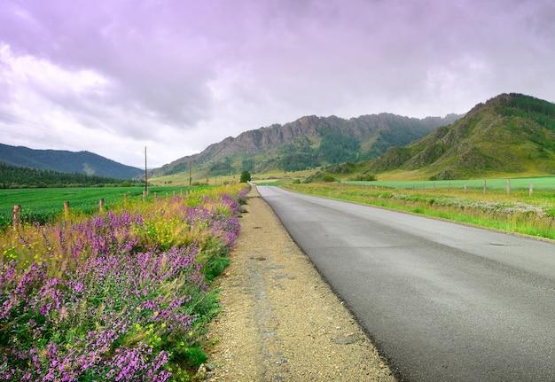 Fioletowe i żółte dzikie kwiaty na zielonym polu pod zachmurzonym niebem syberia rosja