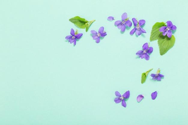 Fioletowe kwiaty altówki z liśćmi na miętowym tle