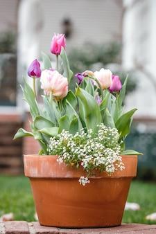 Fioletowe kwiaty na brązowym glinianym garnku