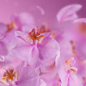 Fioletowe kwiaty orchidei z latającym płatkiem na różowej powierzchni rozmycia