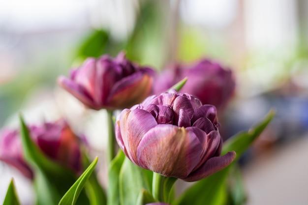 Fioletowe kwiaty w ogrodzie w słoneczny dzień