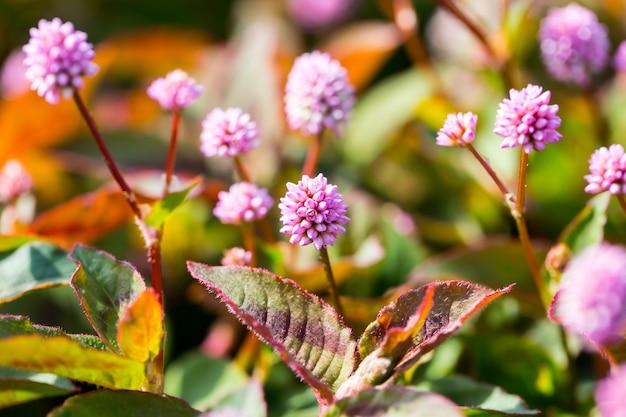Fioletowe kwiaty w polu