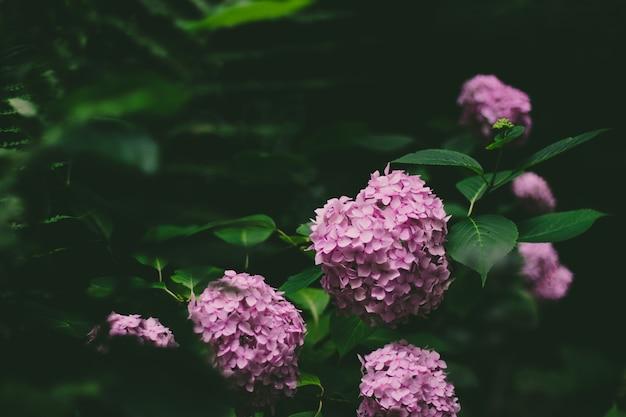 Fioletowe kwiaty zielone i liście