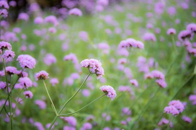 Fioletowe kwiaty zimą z pięknem natury.