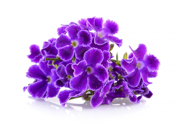 Fioletowe kwiaty