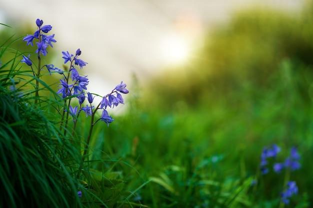 Fioletowe kwitnące rośliny w polu trawy