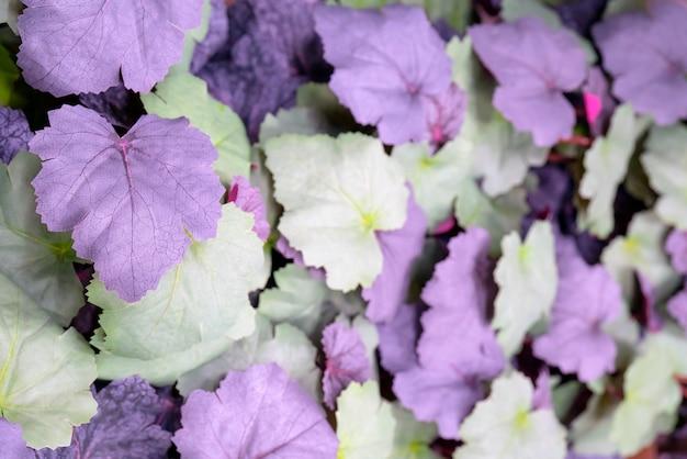 Fioletowe liście są sztucznym materiałem.