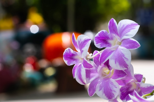Fioletowe orchidee na ulicy