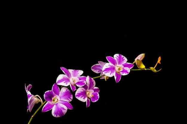Fioletowe orchidee