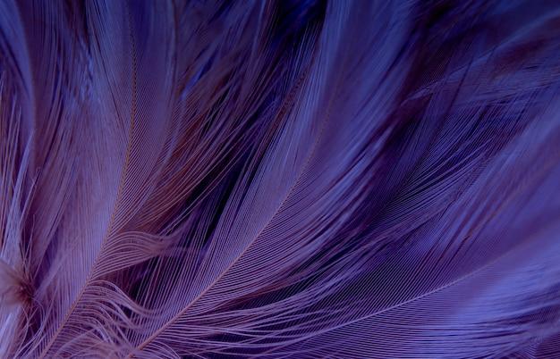 Fioletowe pióra tekstura tło.