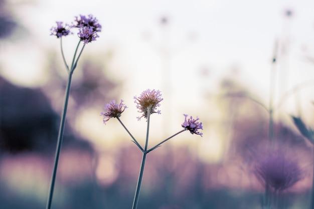 Fioletowy kwiat na niebie.