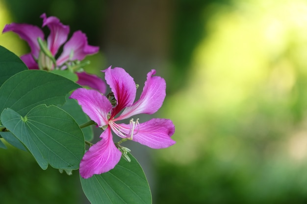Fioletowy kwiat na tle unfocused