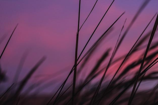 Fioletowy zachód słońca