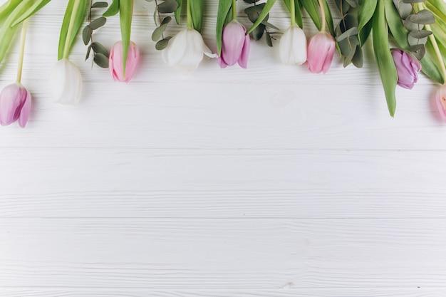 Fiołkowi i biali tulipany na drewnianym tle.