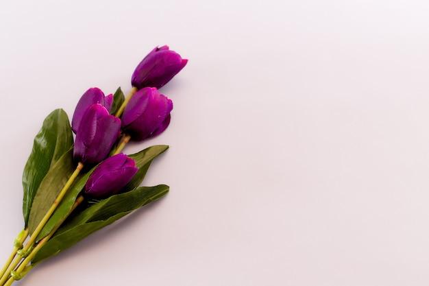 Fiołkowi tulipany kwitną wiosny tło