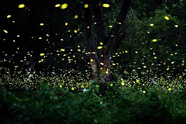 Firefly w lesie