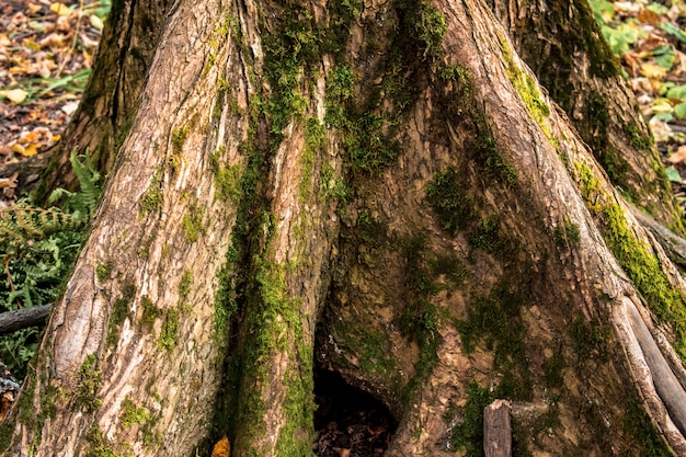 Fiszorka las opuszcza tekstury tła tła jesień