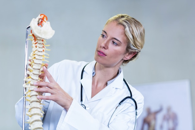 Fizjoterapeuta bada model kręgosłupa