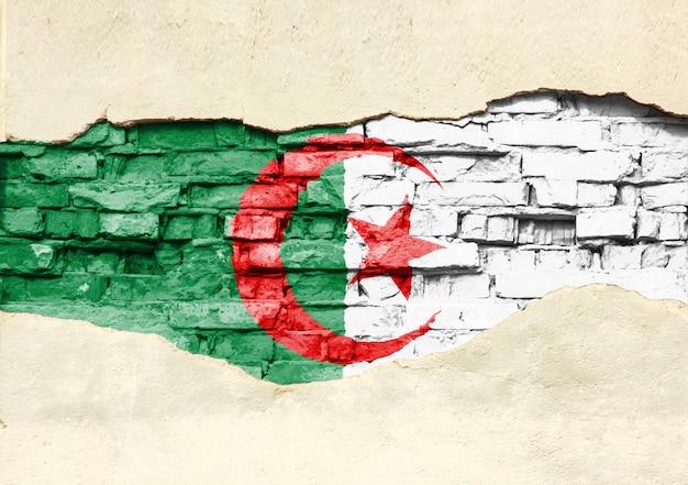 Flaga narodowa algierii na tle cegły. mur z cegły z częściowo zniszczonym tynkiem, tłem lub teksturą.