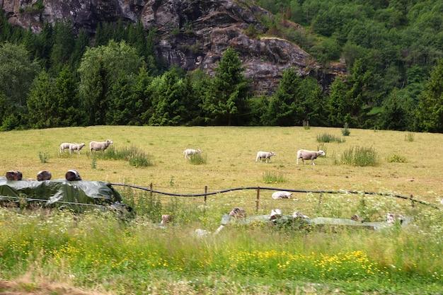 Flam wieś w górach norwegii