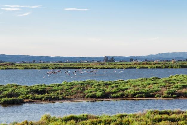 Flamingi latające w parku przyrody delta del ebro. katalonia
