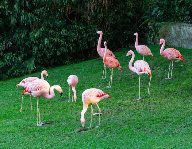 Flamingi lub flamingi to rodzaj ptaków brodzących z rodziny phoenicopteridae.