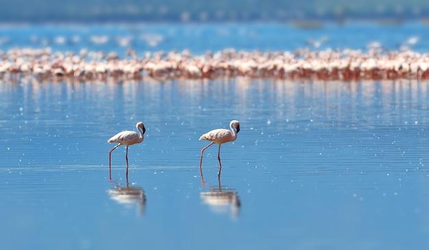 Flamingi na jeziorze na sawannie