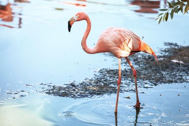 Flamingi nad brzegiem potoku