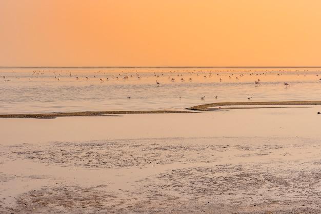 Flamingi przy zmierzchem w solankowych stawach blisko walvis zatoki w namibia.