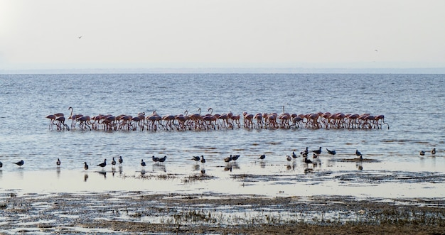 Flamingi w jeziorze manyara - tanzania