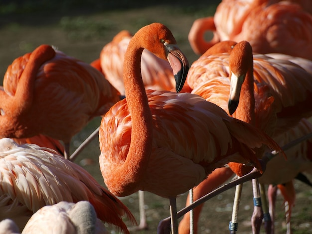 Flamingi w naturze