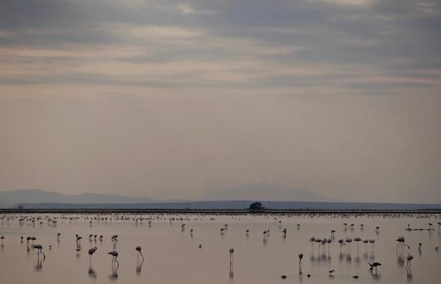 Flamingi w parku narodowym amboseli - kenia