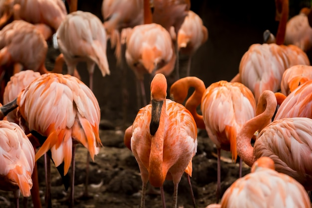 Flamingo ma piękny pomarańczowy kolor.
