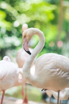 Flamingo naturalne tła
