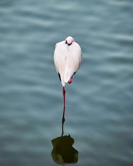 Flamingo zoo powierzchni wody zoo