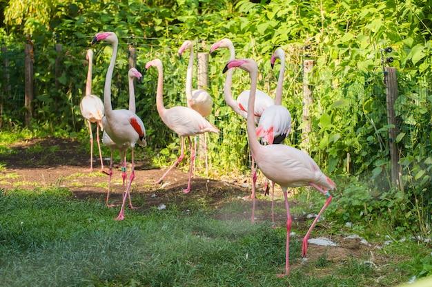 Flamingów ptaki stoi w parku