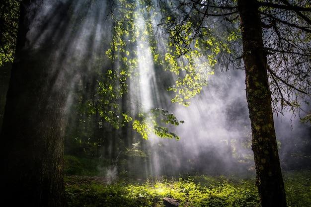 Flary słoneczne przechodzą przez mgłę lub dym między zielonymi liśćmi w lesie