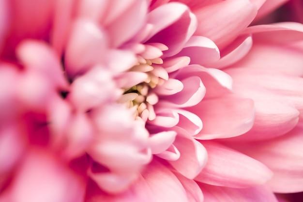 Flora branding and love concept koralowa stokrotka płatki kwiatów w rozkwicie abstrakcyjna kwiatowa kwiatowa sztuka powrót...