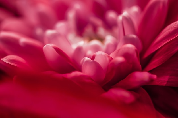Flora branding i miłość koncepcja czerwona stokrotka płatki kwiatów w rozkwicie streszczenie kwiatowy kwiat sztuka tło...