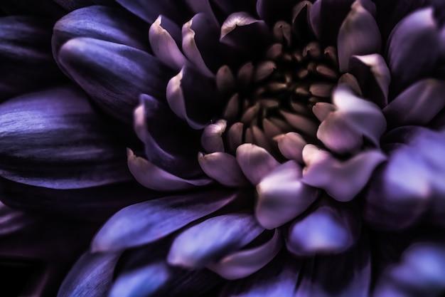 Flora branding i miłość koncepcja fioletowe płatki kwiatu stokrotki w rozkwicie streszczenie kwiatowy kwiat sztuka bac...
