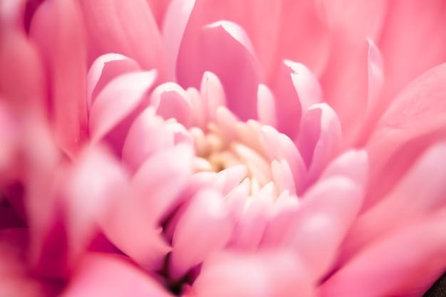 Flora branding i miłość koncepcja koralowa stokrotka płatki kwiatów w rozkwicie streszczenie kwiatowy kwiat sztuka tło kwiaty na wiosnę natura dla perfum zapach ślub luksusowe piękno marka wakacje projekt