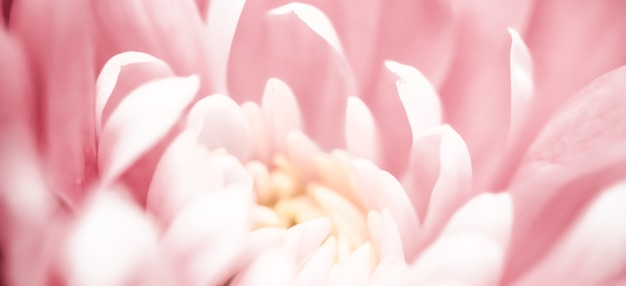 Flora branding i miłość koncepcja różowa stokrotka płatki kwiatów w rozkwicie streszczenie kwiatowy kwiat sztuka tło kwiaty na wiosnę natura dla perfum zapach ślub luksusowe piękno marka wakacje projekt