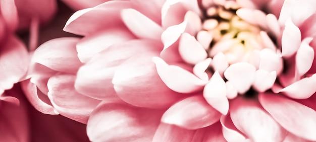 Flora branding i miłość koncepcja różowa stokrotka płatki kwiatów w rozkwicie streszczenie kwiecisty kwiat sztuka tło...