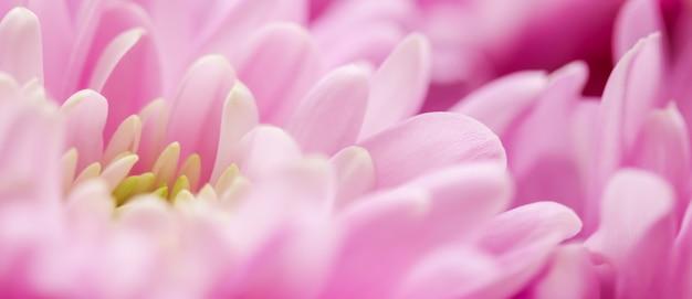 Flora branding i miłość koncepcja różowa stokrotka płatki kwiatów w rozkwicie streszczenie kwiecisty kwiat t...