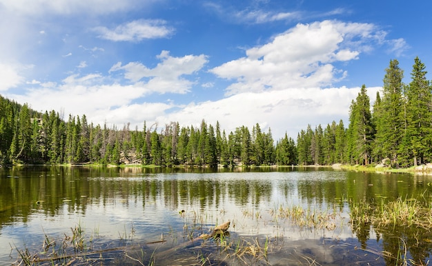 Flora i fauna parku narodowego gór skalistych, kolorado usa