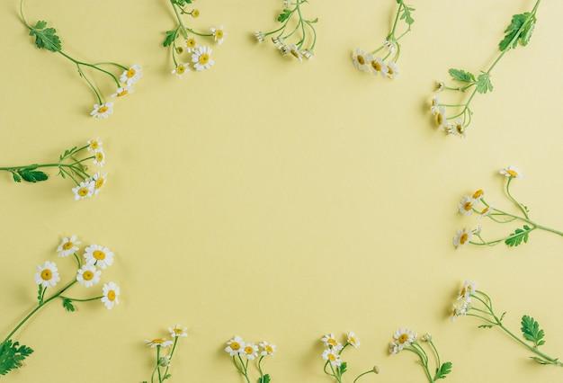 Floralframe kwiatów stokrotka rumianku biały na żółtym tle. leżał płasko, widok z góry. lato w tle.