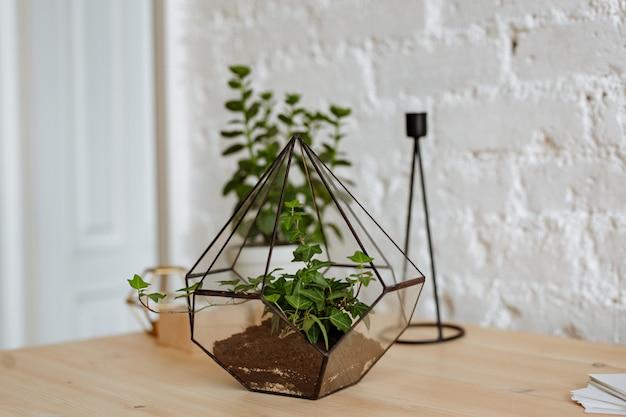 Florarium z żywymi roślinami na stole w biurze.